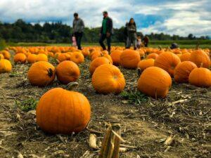 FLBBA pumpkin patch